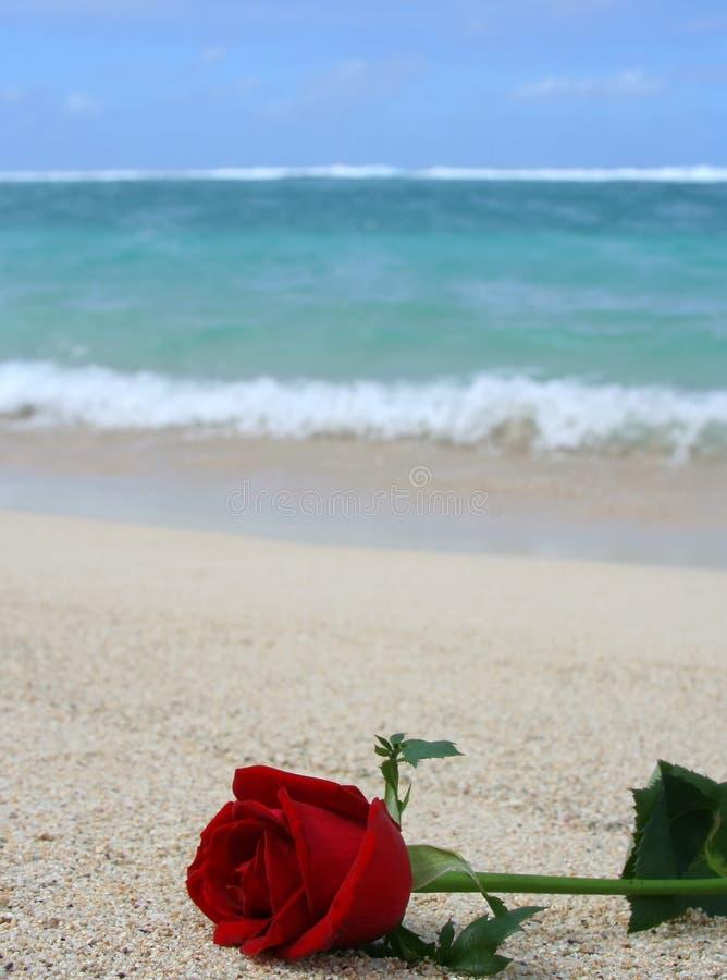 Fleur sur la plage image libre de droits