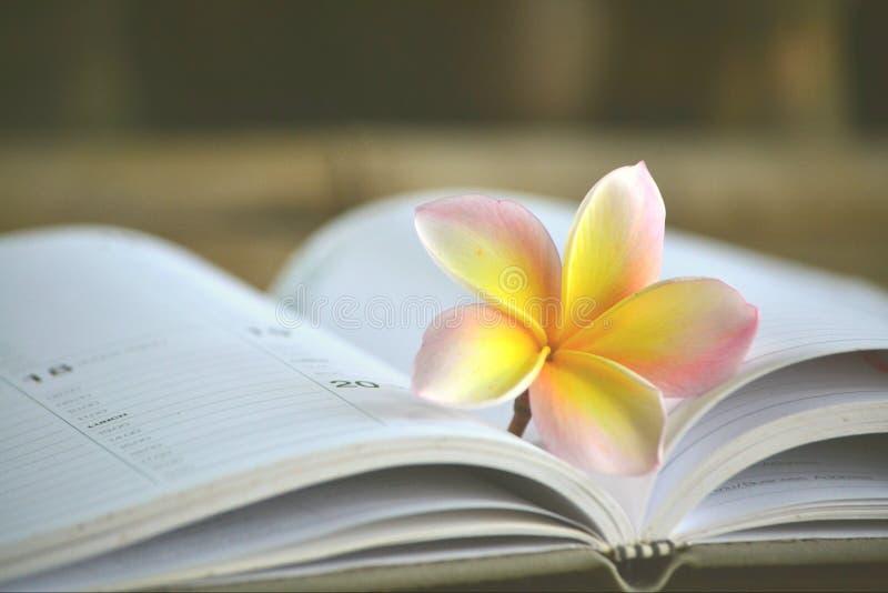 Fleur sur le carnet photographie stock libre de droits