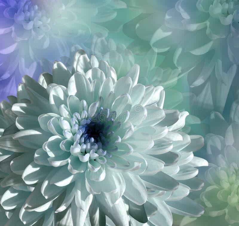 Fleur sur le fond de bleu-turquoise chrysanthème blanc-bleu de fleur collage floral Composition de fleur image stock
