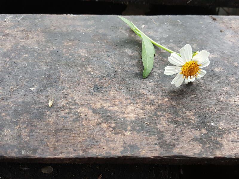 Fleur sur le fond en bois photo libre de droits