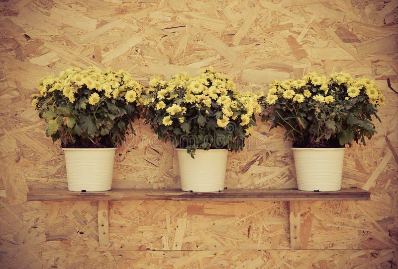 Fleur sur le mur images libres de droits