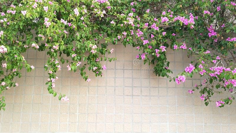 Fleur sur le mur photographie stock libre de droits