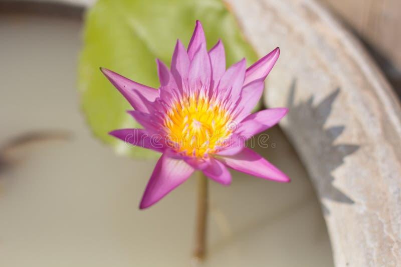 Fleur sur le pot photos stock