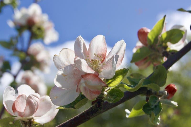 Fleur sur un arbre photographie stock libre de droits