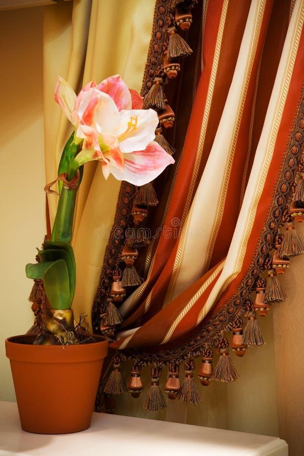 Fleur sur un fond des rideaux photographie stock libre de droits