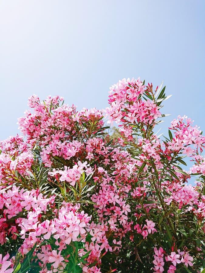 Fleur surréaliste de strelitzia de problème à la mode tropical vif et fond floral photographie stock libre de droits