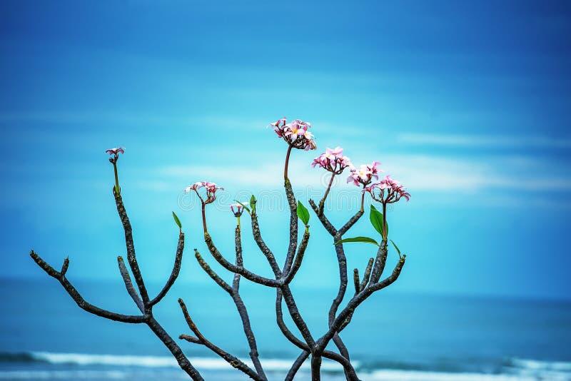 Fleur, tête de fleur, pétale, orchidée, fraîcheur, feuille, beauté en nature, plan rapproché, botanique, fleur, océan, mer, plage photographie stock libre de droits