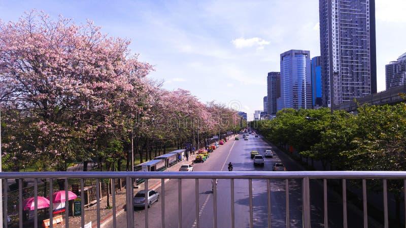 Fleur thaïlandaise en parc de Jatujak photographie stock