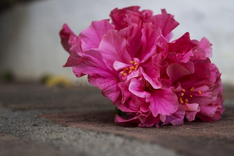 Fleur tombée photographie stock libre de droits