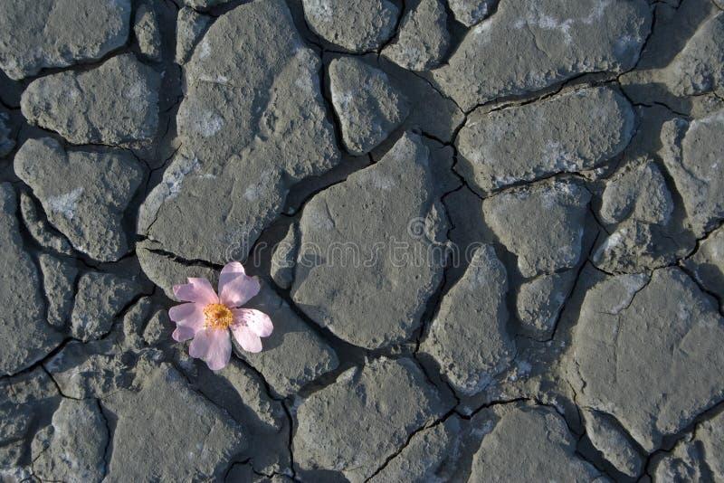 Fleur tombée photos libres de droits