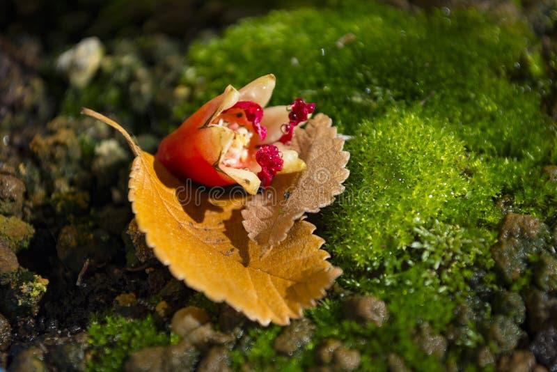 Fleur tombée de la grenade de l'automne coloré image stock