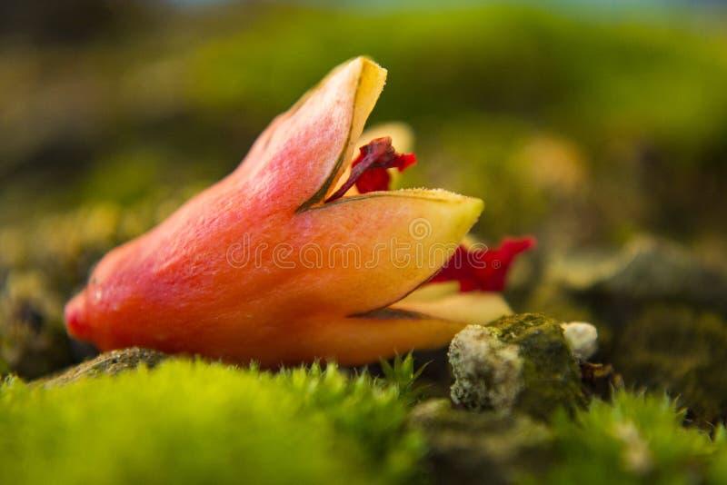 Fleur tombée de la grenade de l'automne coloré photos stock