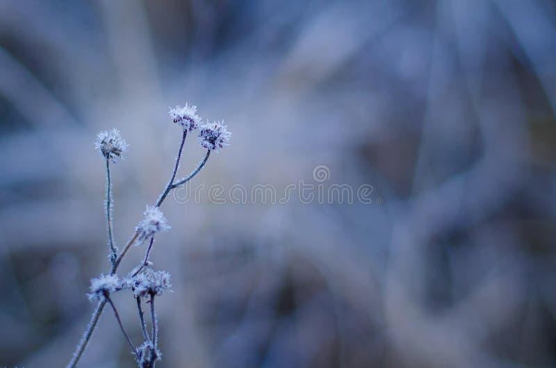 Fleur toujours life2 images libres de droits