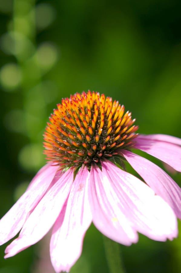 Fleur triste photographie stock libre de droits