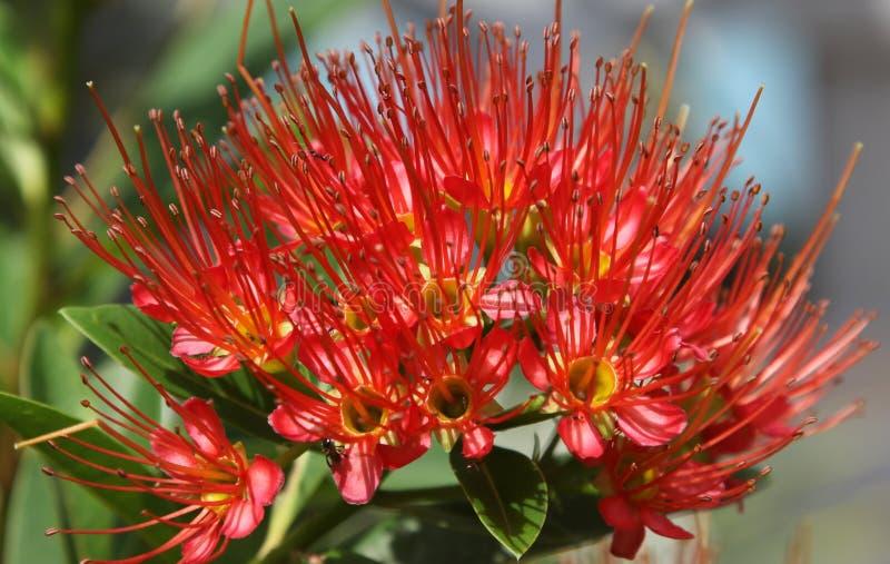 Fleur tropicale photos stock