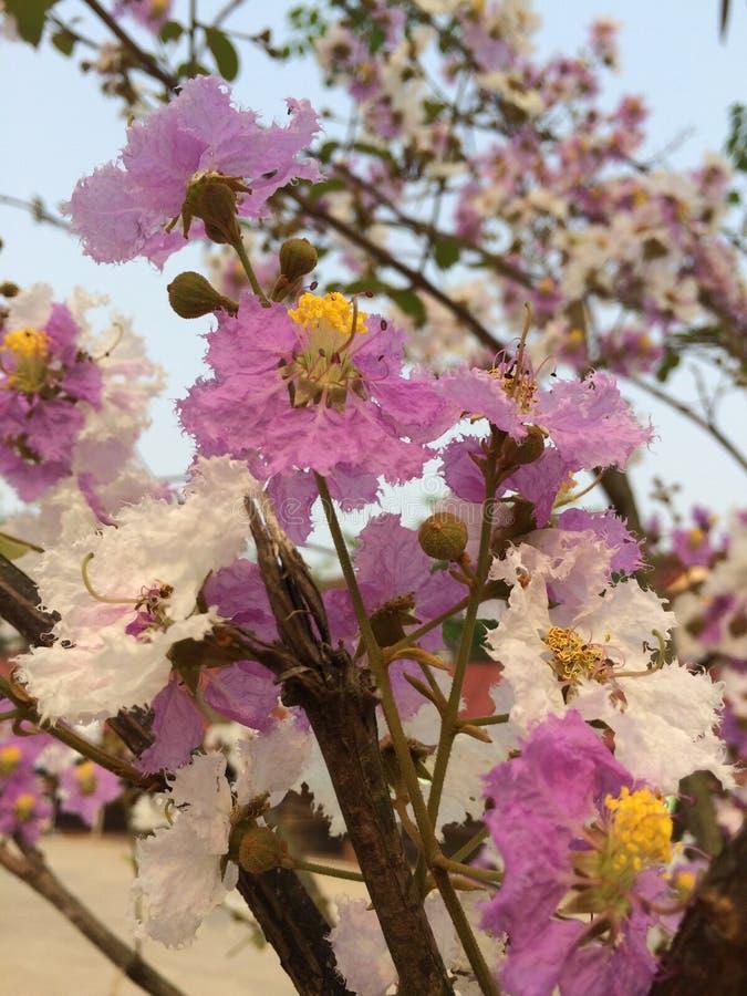 Fleur tropicale photos libres de droits