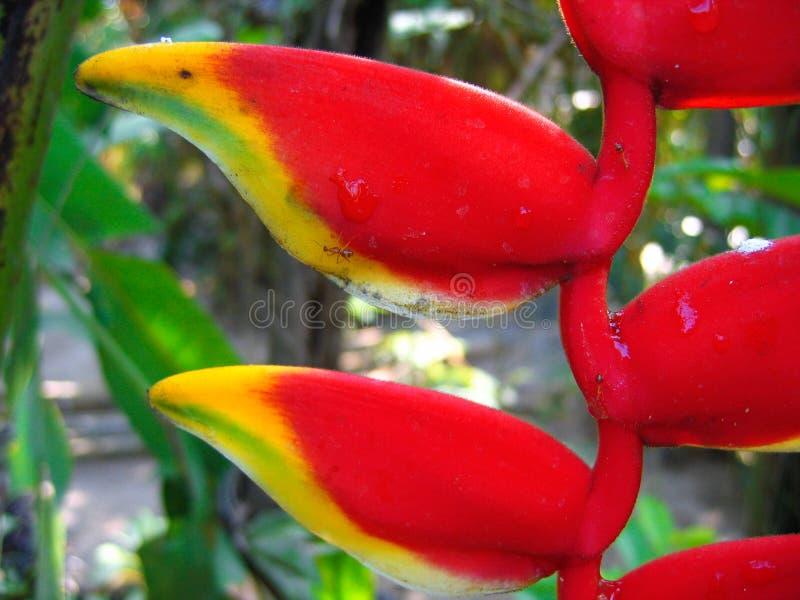 Fleur tropicale dans le paradis images libres de droits