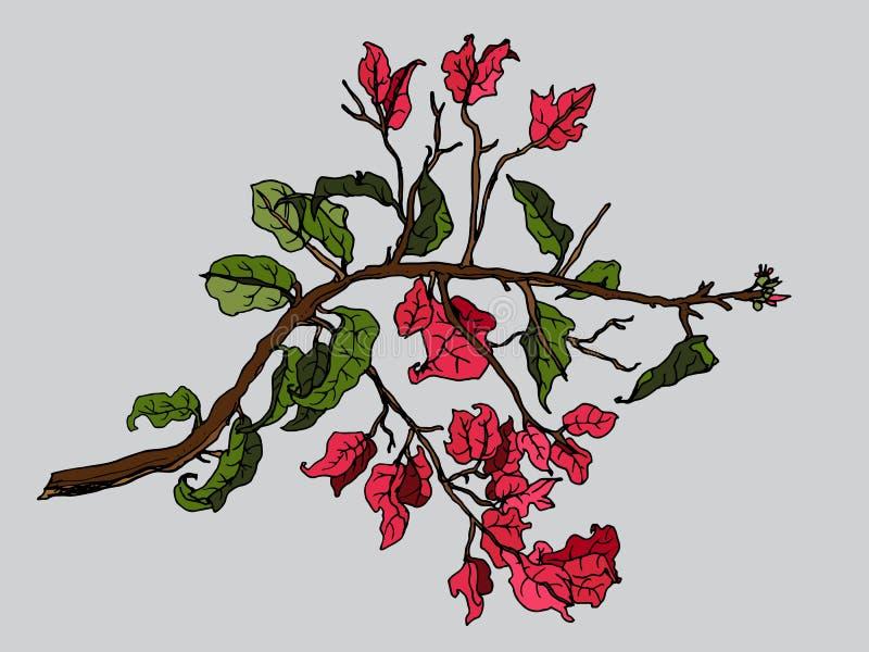 Fleur tropicale de bouganvillée rouge illustration de vecteur