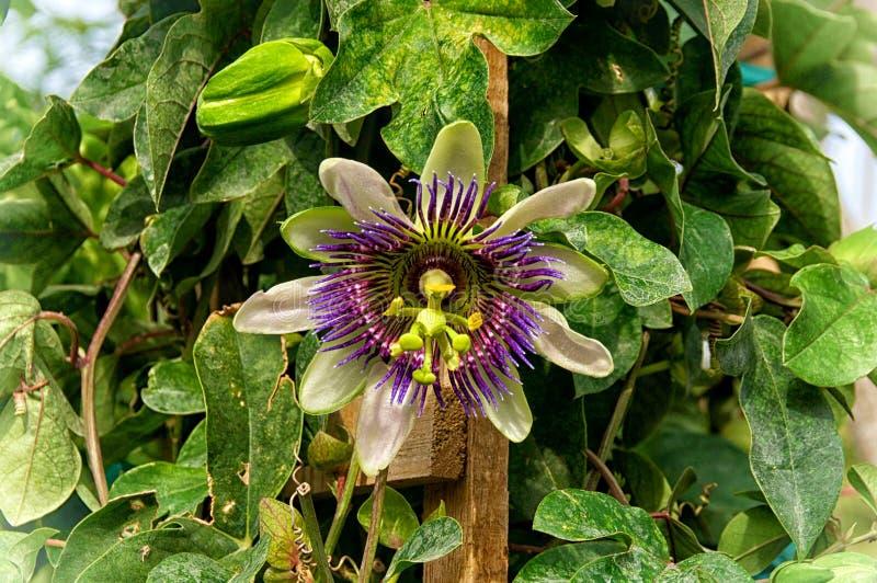 Fleur tropicale exotique colorée images stock