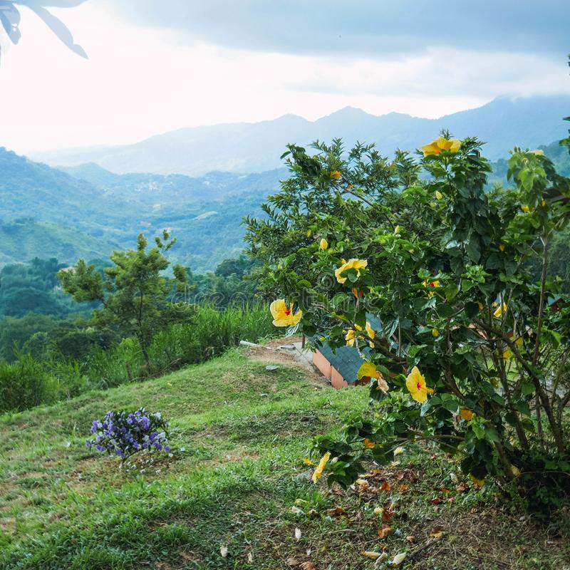 Fleur tropicale parmi les montagnes photo stock