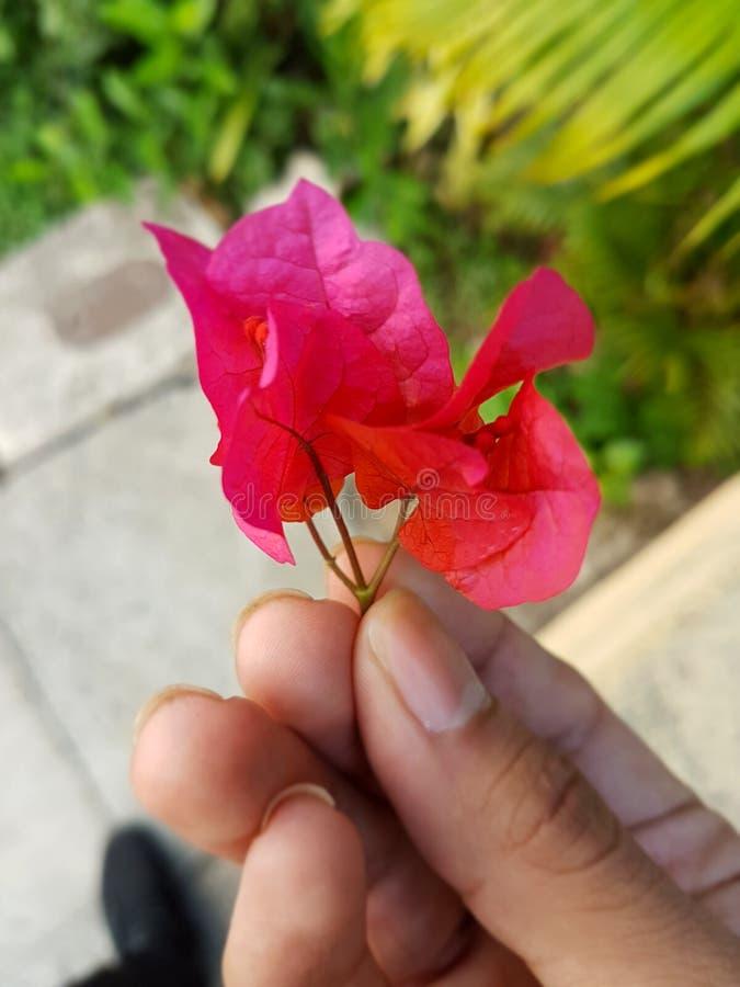 Fleur tropicale, rouge, petite fleur, photos libres de droits