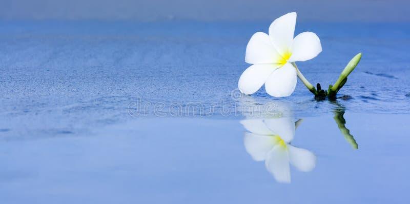 Fleur tropicale sur la plage image libre de droits