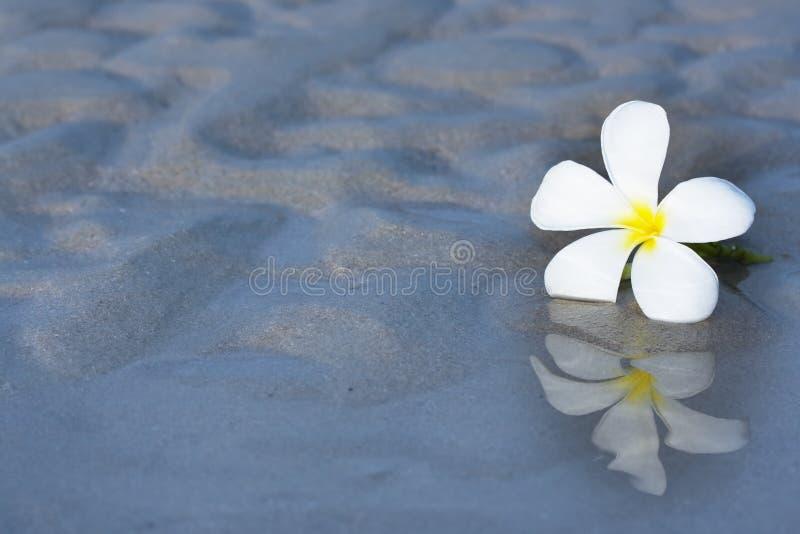 Fleur tropicale sur la plage image stock