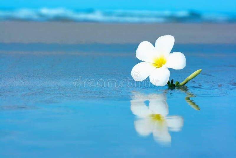 Fleur tropicale sur le beachv image stock