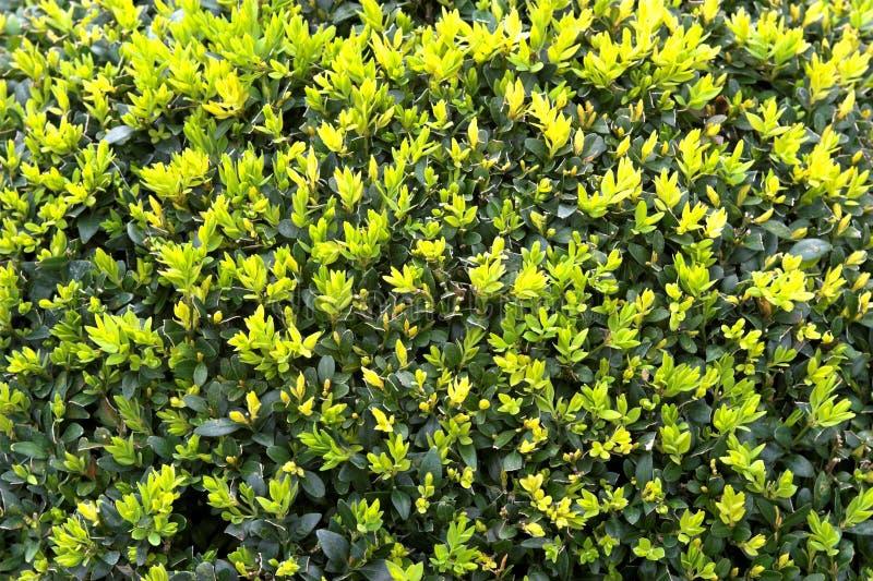 Fleur vert clair et jaune images libres de droits