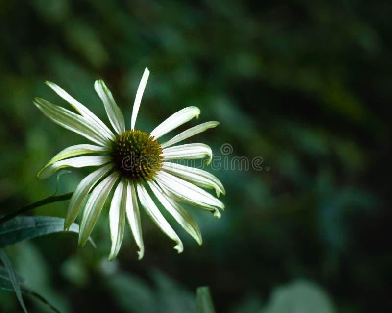 Fleur verte images libres de droits