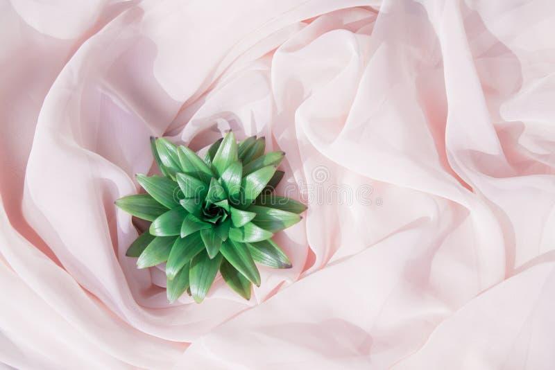 Fleur verte sur le fond rose images libres de droits