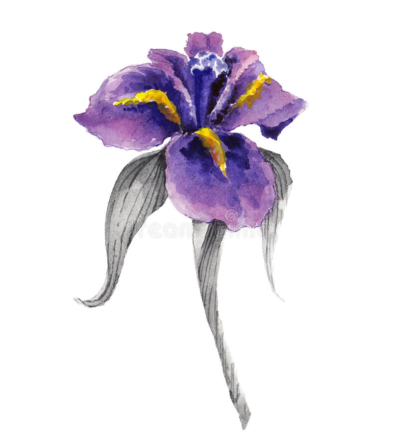 Fleur violette d'iris d'aquarelle illustration de vecteur
