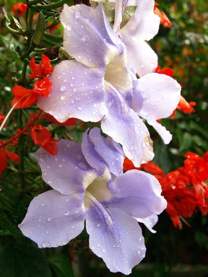 Fleur violette dans la forêt tropicale tropicale photo libre de droits