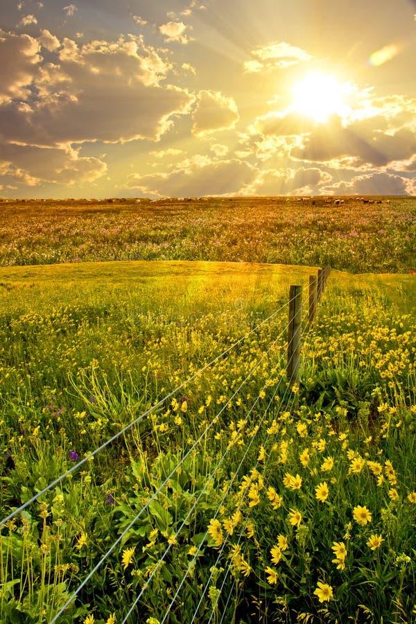 Fleur, zone, frontière de sécurité photographie stock