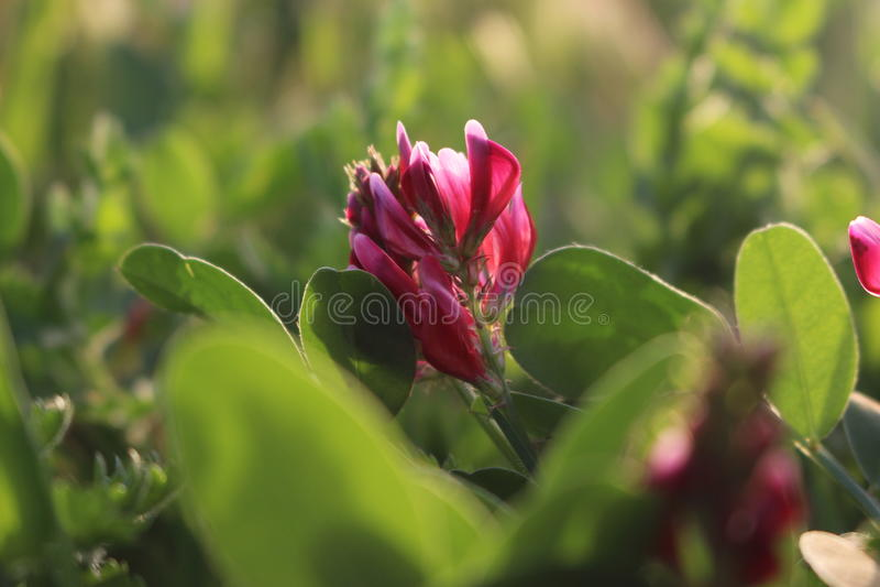 Fleure22 imagem de stock