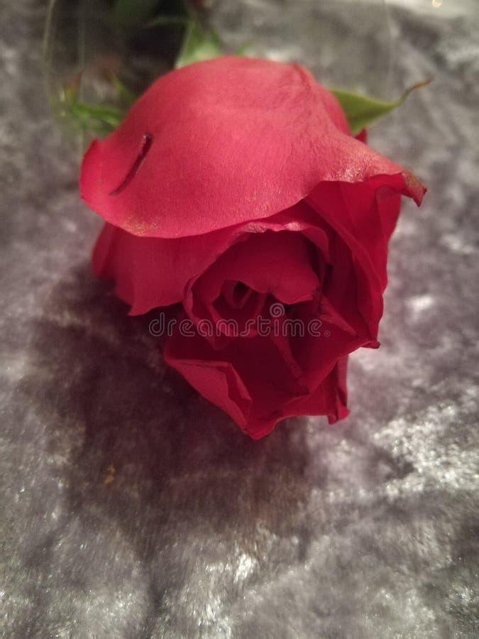 Fleure de helgon Valentin royaltyfri fotografi