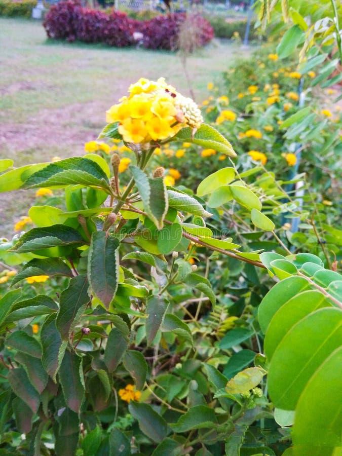 Fleuri mignon ! images stock