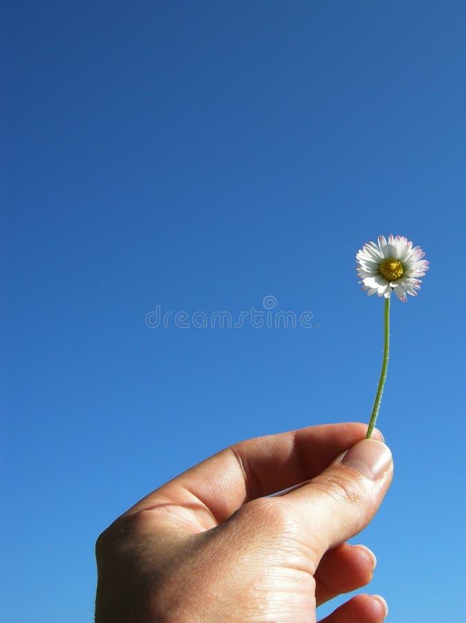 Fleurissez dans la main illustration stock