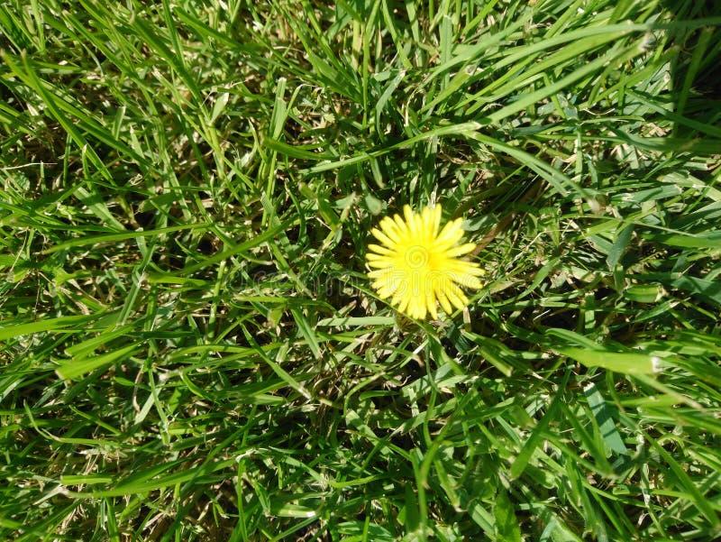 Fleurissez dans le pré photo libre de droits