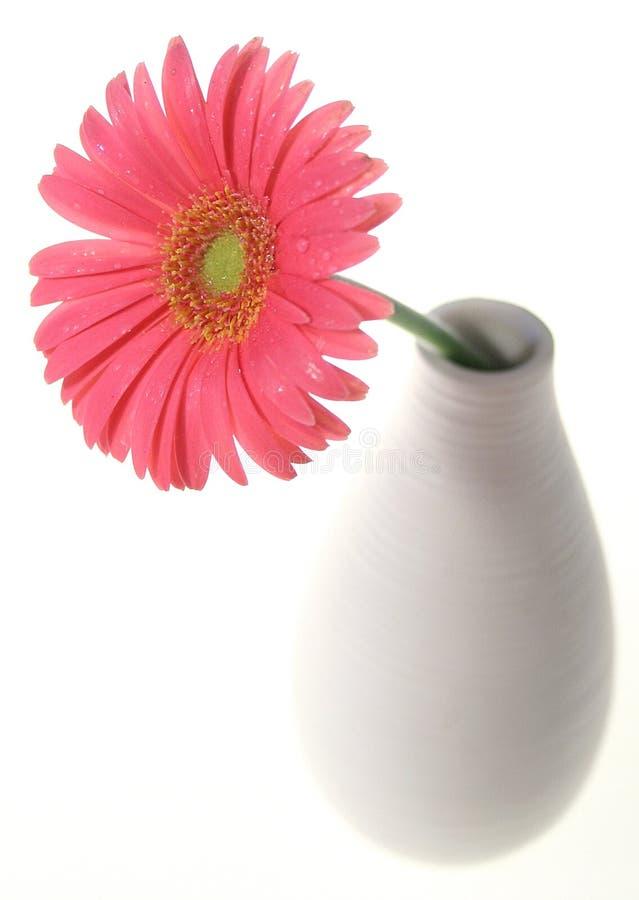 Fleurissez dans le vase photographie stock