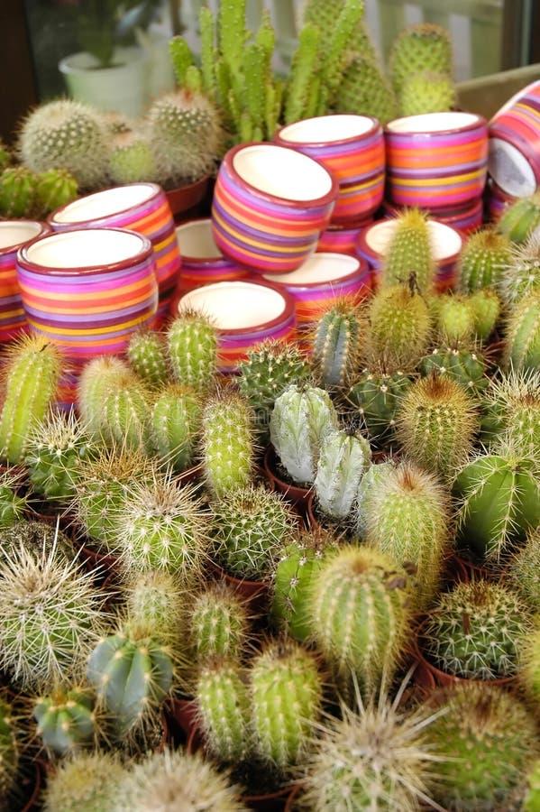 Fleurissez le cactus image libre de droits