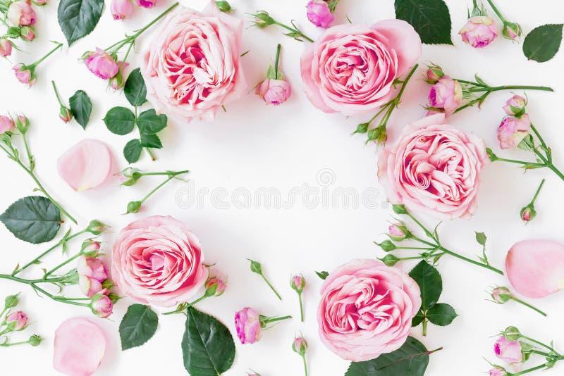 Fleurissez le cadre avec les roses, les bourgeons et les feuilles roses sur le fond blanc Configuration plate, vue supérieure Fon photographie stock