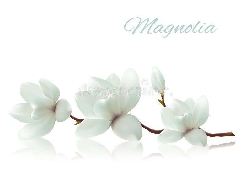 Fleurissez le fond avec la branche de fleur de la magnolia blanche illustration stock