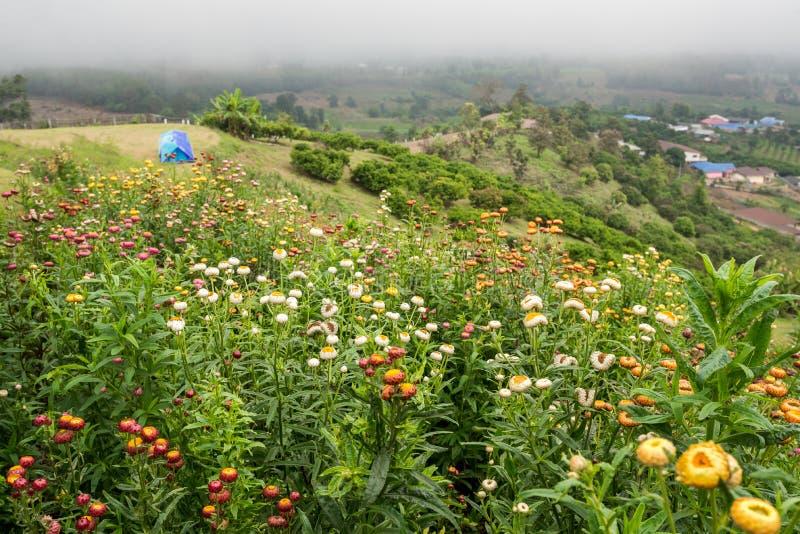Fleurissez le pré sur la montagne avec l'endroit de camping de tente image stock