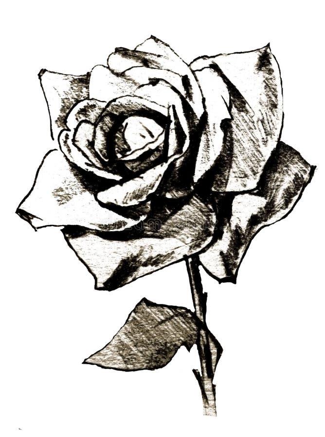 Fleurissez le summre frais blanc de nature de noir simple de rose illustration libre de droits