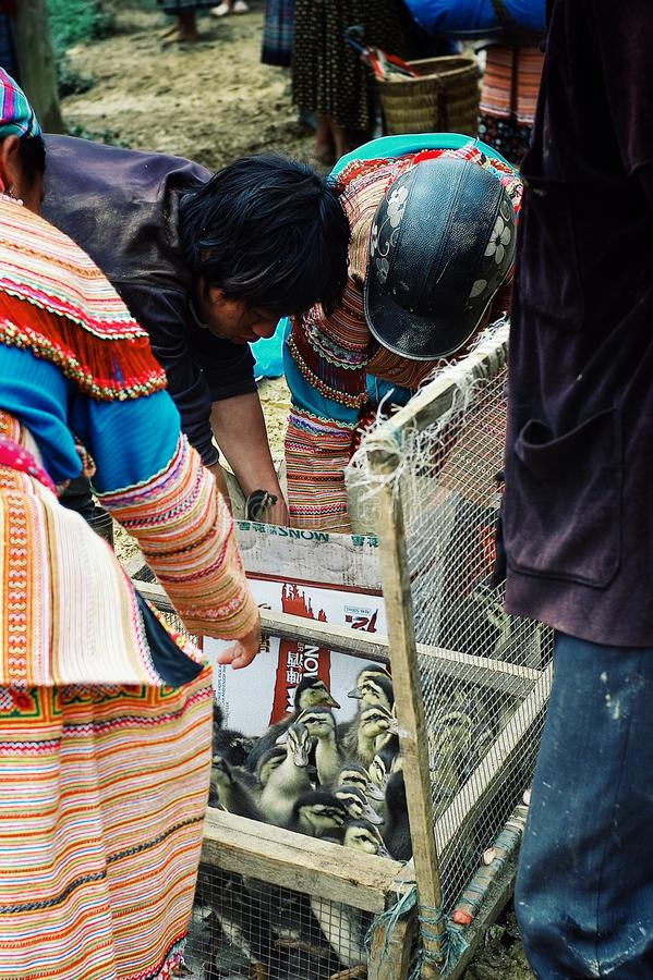 fleurissez les membres de tribu de hmong achetant et vendant des oiseaux et de petits canards au marché local d'agriculteur de vi photos stock