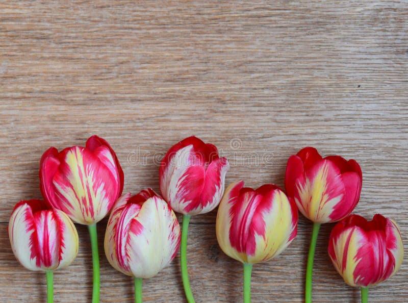 Fleurissez, vous êtes levé, dentelez, rouge, bouquet, d'isolement, nature, fleur, blanc, fleurs, florales, amour, beauté, ressort images libres de droits