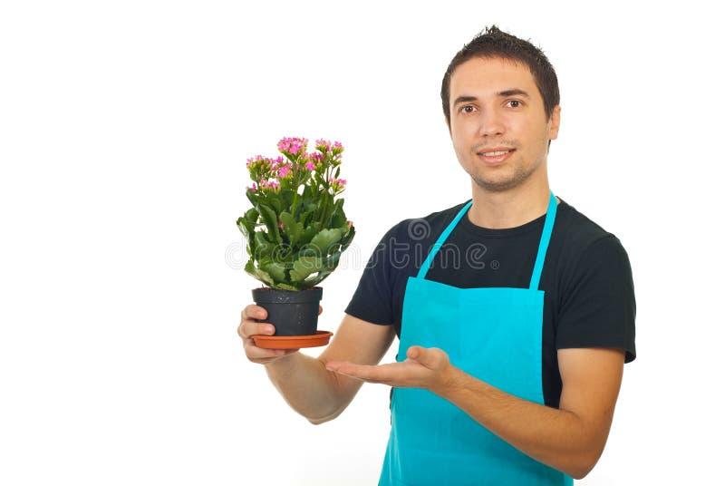 Fleuriste mâle affichant à la fleur de kalanchoe photographie stock libre de droits