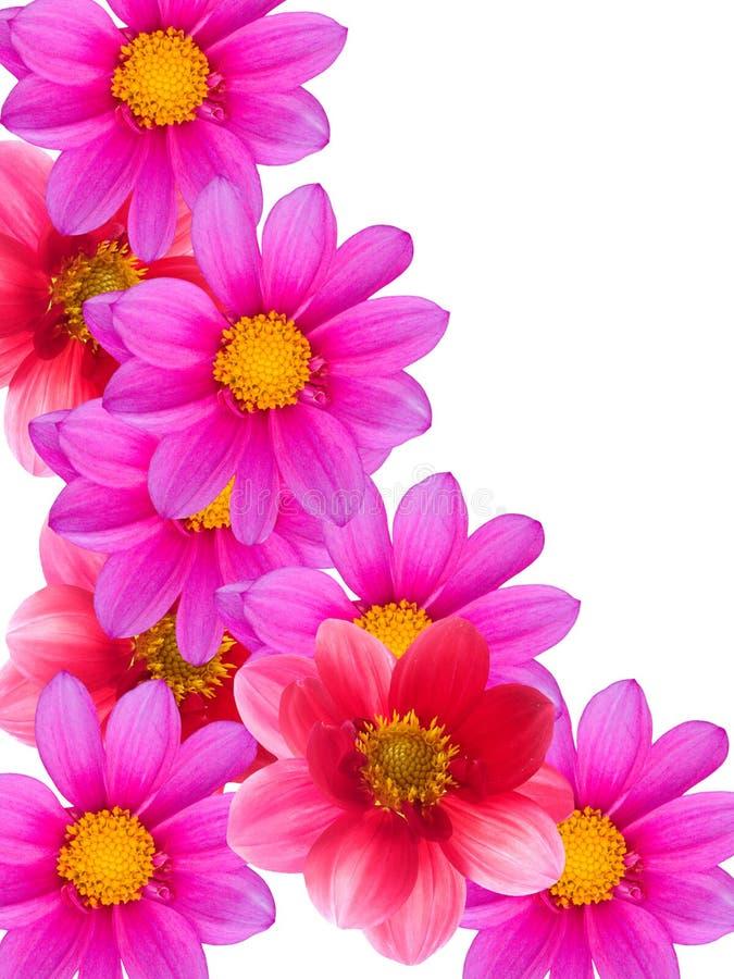 Fleurit décoratif images stock