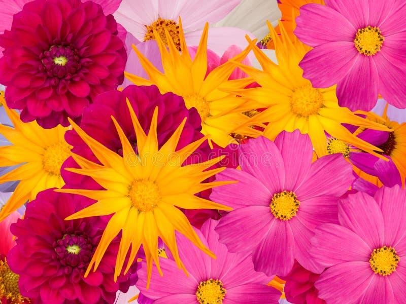 Fleurit dekorative photos stock